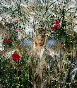 angel249